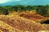 """Vỏ cam đem """"mùa xuân"""" trở lại cho mảnh đất khô cằn của Costa Rica"""