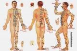 Kinh lạc: Vì sao người xưa biết trong khi giải phẫu tìm không thấy?