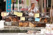 Lo ngại vi rút cúm gia cầm xâm nhiễm vào Việt Nam, Bộ NN-PTNT ra công điện khẩn