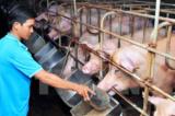Phát hiện chủng virus cúm lợn mới ở Trung Quốc có khả năng gây đại dịch