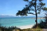 Bình Thuận: Vùng biển được cấp phép nhận chìm bùn thải có cả 4 nhóm động vật đáy