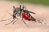 Từ đầu năm đến nay, cả nước có 96.002 ca mắc sốt xuất huyết
