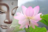 Lòng tốt là một vòng tuần hoàn, gieo mầm nhân quả mai sau
