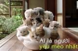 Video: Người dân nước nào yêu mèo nhất?
