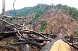 Quảng Nam: Kỷ luật nhiều cán bộ xã vụ phá rừng phòng hộ Tiên Lãnh