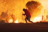 Cháy rừng Thomas Fire, Người đàn ông liều mình cứu chú thỏ
