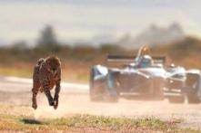 Xe điện Formula E đua tốc độ với báo gê-pa, bên nào sẽ giành chiến thắng?