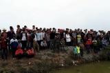 """Nghệ An: Hàng trăm người đổ xô đi xem """"cá lạ"""" dưới kênh nước"""