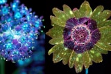 Nhiếp ảnh gia Craig Burrows ở Mỹ đã dùng kỹ thuật nhiếp ảnh đặc biệt bằng tia cực tím (UV) để chụp những đóa hoa phát ra huỳnh quang như trong thế giới mộng ảo của bộ phim điện ảnh Avatar.