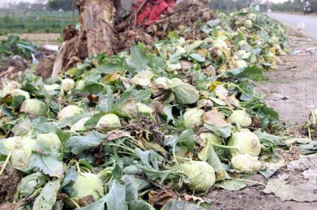 Su hào, củ cải bị nhổ bỏ vì rớt giá, vẫn nhập 3.000 tấn từ Trung Quốc