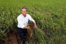 Trang trại Nhật Bản mang giống và công nghệ sang trồng lúa ở Việt Nam