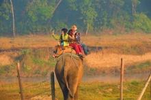 Sự thật về ngành du lịch cưỡi voi ở châu Á
