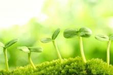 Vì sao thực vật có thể phân biệt được họ hàng của chúng?
