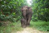 loài động vật có nguy cơ biến mất vĩnh viễn trên Trái Đất