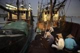 Đội tàu câu mực của Trung Quốc – Không đơn thuần chỉ là đánh bắt mực