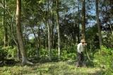 Người đàn ông Ấn Độ hơn 40 năm trồng cây gây rừng trên đảo