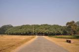Cây Gừa rộng nhất thế giới, trông giống như một khu rừng