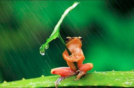 """Câu chuyện suy ngẫm về """"con ếch, sự nỗ lực và sức mạnh của lời nói"""""""