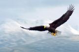 Tâm thế chim đại bàng và 7 nguyên tắc sống cần học tập