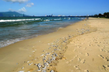 Vụ 2 tấn cá mòi chết trắng bờ biển Đà Nẵng: Nước biển đạt chuẩn