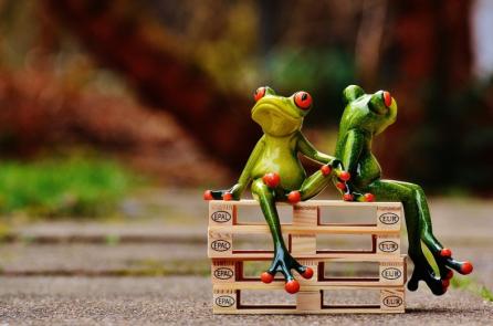"""Bài học từ """"1000 con ếch"""""""