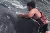 Mỹ: Ngư dân nhảy lên lưng cá voi đang bị kích động để giải cứu nó (video)