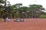 Gia Lai giao 200ha rừng thông Đắk Đoa cho FLC làm sân golf