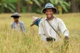 nông dân nghèo
