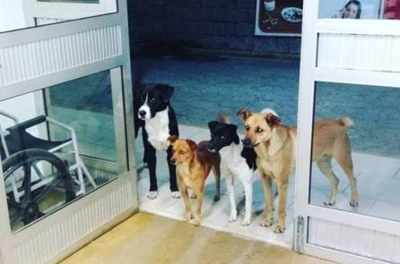 4 chú chó đứng đợi người vô gia cư trong bệnh viện