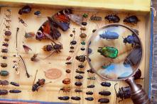 Côn trùng đang chết hàng loạt – dấu hiệu lần Đại tuyệt chủng thứ 6