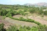 Hơn 28.000 tỷ đồng để bảo vệ, khôi phục rừng Tây Nguyên