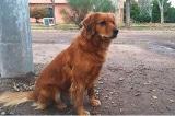 Chủ bị bắt, chú chó trung thành đợi ở đồn cảnh sát suốt 1 năm