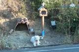 Chú chó Hy Lạp chờ đợi suốt một năm rưỡi ở nơi chủ bị tai nạn qua đời