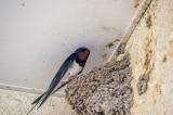 Từ chuyện tổ chim suy ngẫm về giáo dục