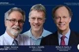 Giải Nobel Y học 2019 vinh danh 3 nhà khoa học người  Anh, Mỹ
