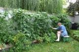 Khu vườn tuy nhỏ nhưng có đủ thức của một gia đình ở TP Brussels