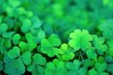 12 quy luật tạo ra may mắn