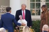 Tổng thống Trump ân xá gà tây trong dịp Lễ Tạ ơn