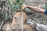 phá rừng tại Bá Thước, Thanh Hóa