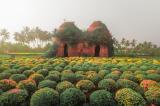Mãn nhãn với làng hoa Cái Mơn dịp Tết nhìn từ trên cao