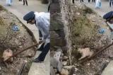 Thôn làng ở Ôn Châu sợ bị truyền nhiễm bệnh, toàn thôn giết chó