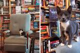 Hiệu sách ở Canada trở nên đông khách nhờ… mèo con