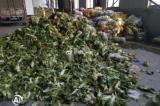 Trung Quốc: Thực phẩm cứu trợ bị chính quyền đánh cắp hoặc để thối trong kho