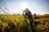 nông nghiệp, xuất khẩu gạo