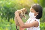 Anh, Mỹ chính thức thử nghiệm chó đánh hơi phát hiện COVID-19