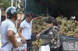 Đón hơn 300 thương nhân Trung Quốc sang thu mua vải thiều tại Bắc Giang