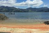 Hàng triệu con tôm hùm chết nhuộm đỏ một bãi biển New Zealand