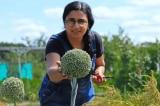 Nữ doanh nhân thành đạt chuyển sang nghề làm vườn