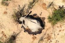 Cái chết bí ẩn của hàng trăm con voi cạnh các hồ nước ở Botswana